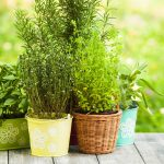 Making a DIY vertical herb garden