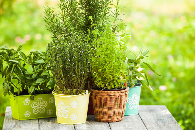 A guide to building your own DIY vertical herb garden